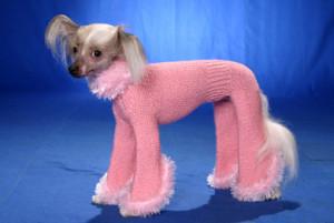 pies-ubranie